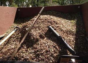Paul The Tree Climber | Arborist, Tree Service, Tree Removal, Tree Trimming | Placer County | mulch