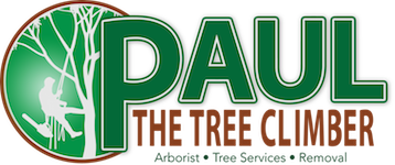 Paul The Tree Climber
