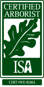 Paul The Tree Climber - ISA Cert